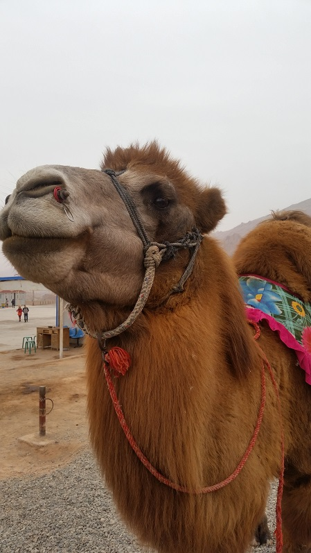 All the desert attractions came with camels